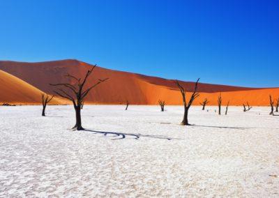 3 Salar dans le Parc National de Namib Unesco
