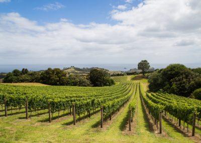 5 Vignobles sur lIle de Waiheke