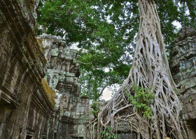 6 Temple Ta Prohm Unesco