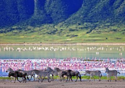 7 Animaux au bord du lac Unesco