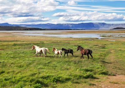 7 Chevaux devant le lac Argentino