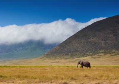 7 Le roi elephant
