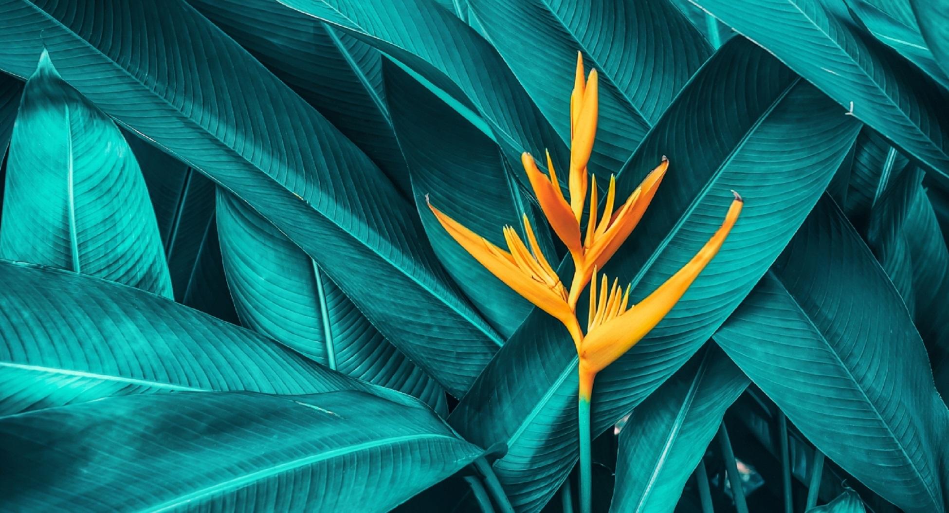 Divers Nature Fleur Gros plan Detail Vert Jaune S721703848 crop