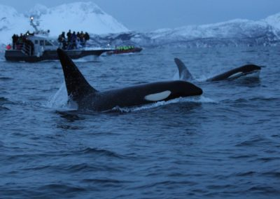 2 Orques dans les fjords de Tromso